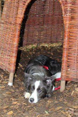 Hundehütte im Villaformat...