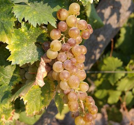 Weine aus Portugal, roséwein, Douro DOP, Vinho Verde DOP, Schaumwein