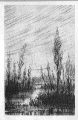 Palude Pavese - 1929 - carboncino su carta -25x30 - proprietà privata