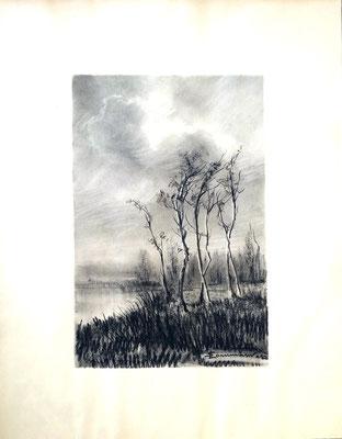 Pioppi - 1943 - carboncino su carta - 25x30 - proprietà privata