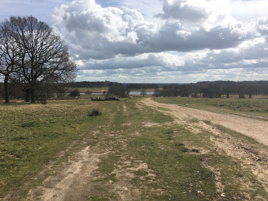 Richmond Park, Running Guide, City Guide, Run My City, run to discover, run to explore, london