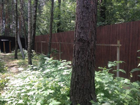 Забор из профнастила под дерево