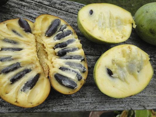 Wilde Frucht vs. Cultivar