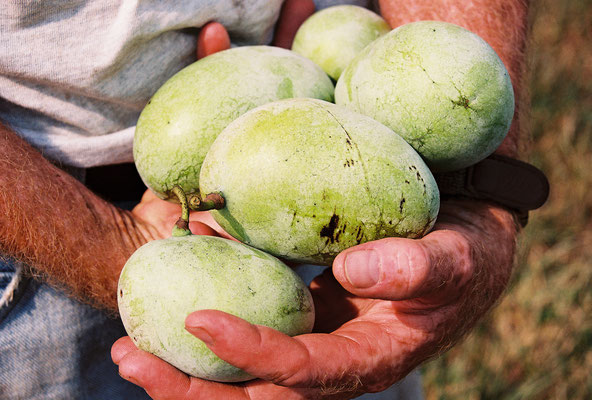 Jim holding pawpaws