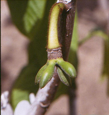 After Pollination, fruit set