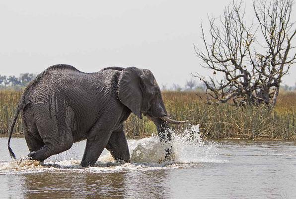 #8 Elefanten