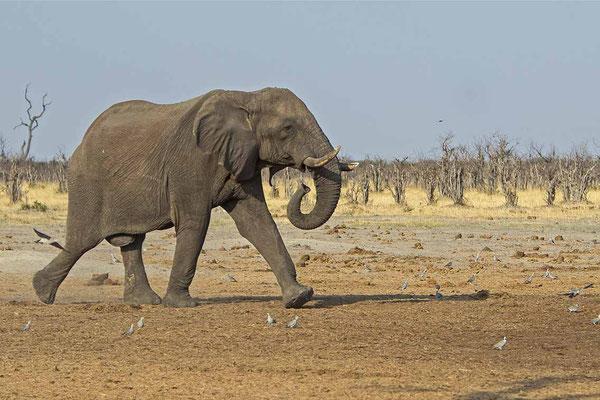 #9 Elefanten