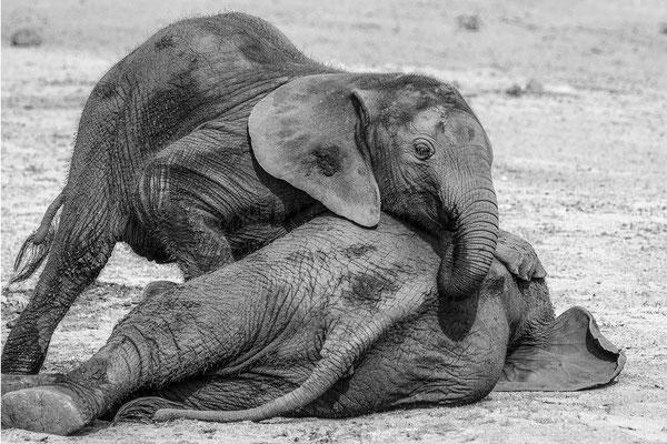 #3 Elefanten