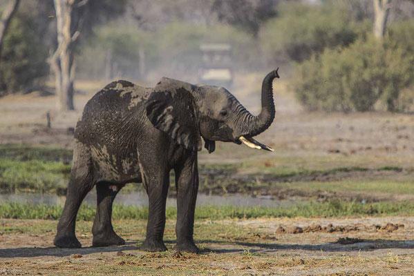 #12 Elefanten