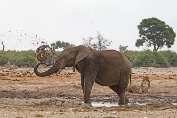 #14 Elefanten