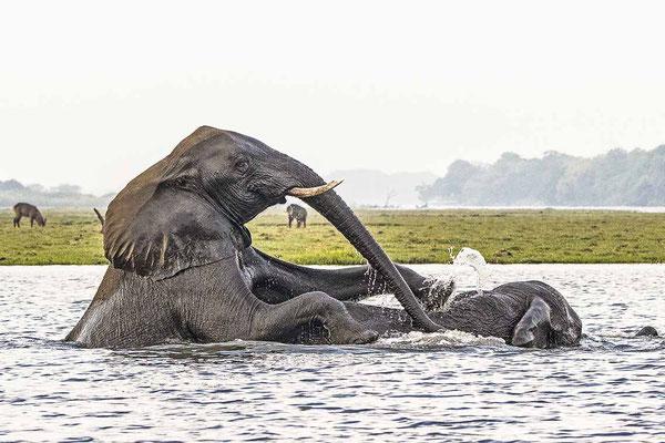 #5 Elefanten