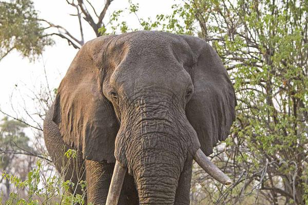 #10 Elefanten