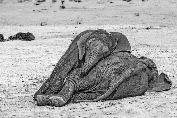 #2 Elefanten