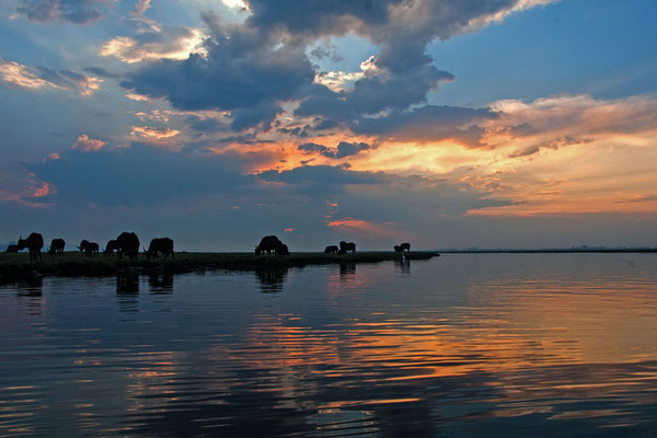 #1 Chobe River