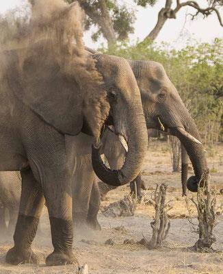#6 Elefanten