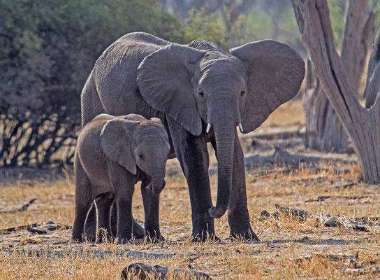 #11 Elefanten