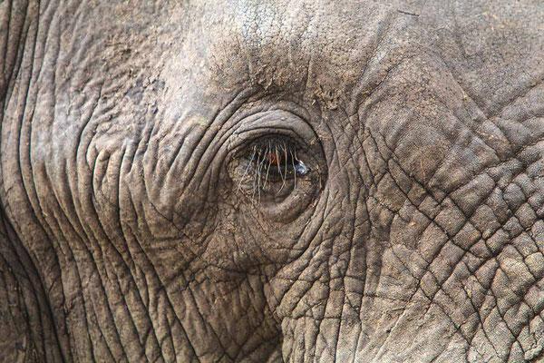 #7 Elefanten