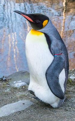 #2 Pinguine