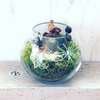 2018年12月 長野 飯田1dayレッスン『モス&サボテン&エアプランツのテラリウム+マクラメ付』作り
