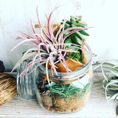 2018年10月 長野 飯田1dayレッスン『木の実と多肉植物のテラリウム』作り