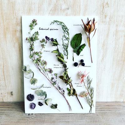 3月 東京 表参道1dayレッスン『ハーブと花の植物標本』作り