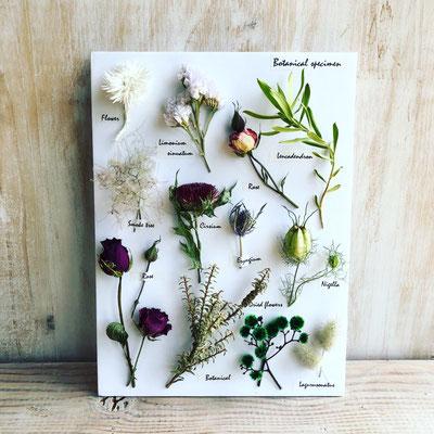 2018年7月 長野 飯田1dayレッスン『植物標本〈フラワー〉』作り