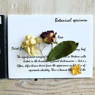 11月ワークショップ「ミニ植物標本」