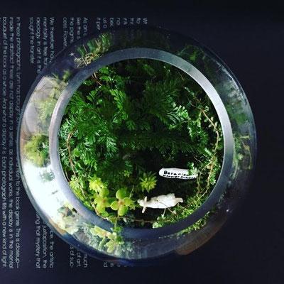 10月表参道ワークショップ「ボタニックガーデン テラリウム」