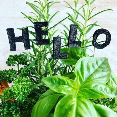2018年6月 長野 飯田1dayレッスン 料理に使える『キッチンハーブの寄せ植え』作り