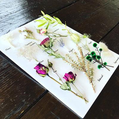 2018年7月 東京 表参道1dayレッスン『植物標本〈フラワー〉』作り