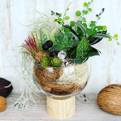 2月 1dayレッスン『多肉植物とエアプランツのテラリウム』作り