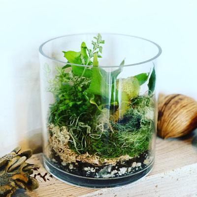10月 オンライン1dayレッスン『植物とコケのテラリウム』作り