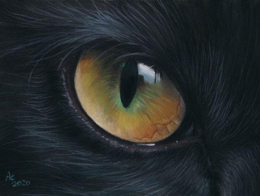 Black Cat Eye, 18x 12cm, Softpastell auf Pastelmat