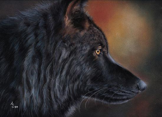 Timber Wolf, 24x30cm, Softpastell auf Pastelmat, Ref. Photo: khalliysgraphy