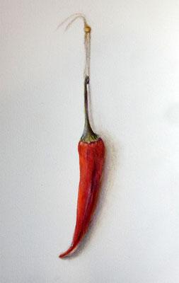 Farbstifte/Aquarell, 18x 24 cm, Ref. Foto own