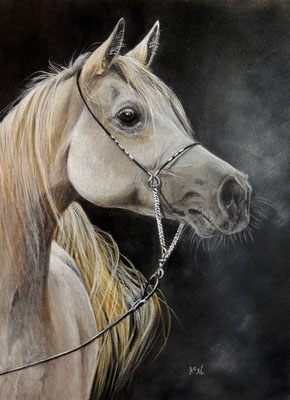 Farbstifte/Aquarell, 24x 32 cm, Ref. Foto Scherling Arabian Horses