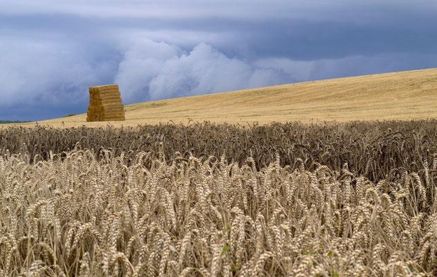 Menace sur les blés