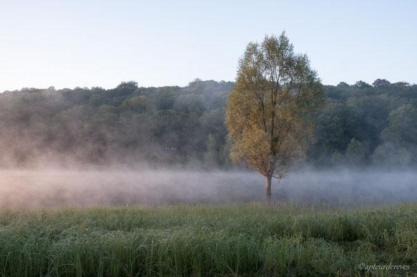 Réveil brumeux
