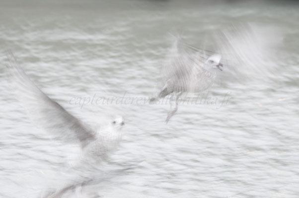 Vapeurs de plumes