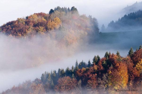 Combien de vies dans cette belle forêt d'automne ?