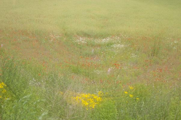 La prairie de Cheyenne...cours ma belle, cours encore !