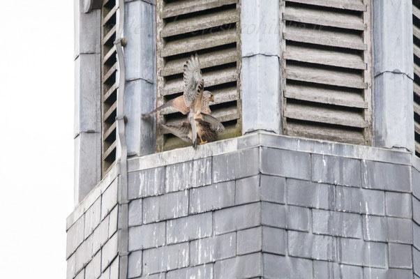 Sur le clocher de l'église ma brave dame......