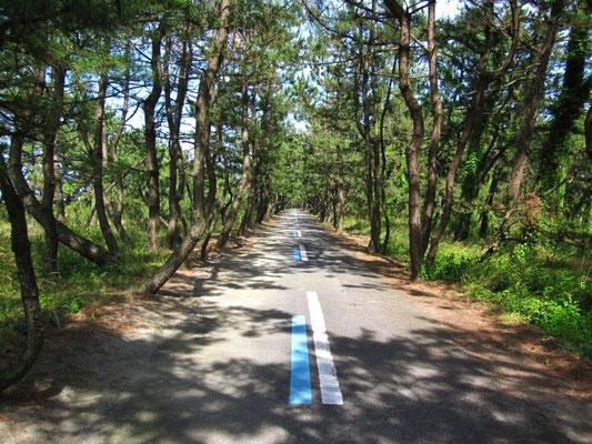 サイクリングロード 古志の松原