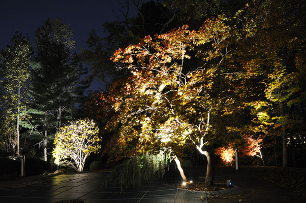 With a wide and deep yard, it's essential to carefully select key focal-point trees to uplight, in order to break up the darkness and move your attention across the lighted vista.