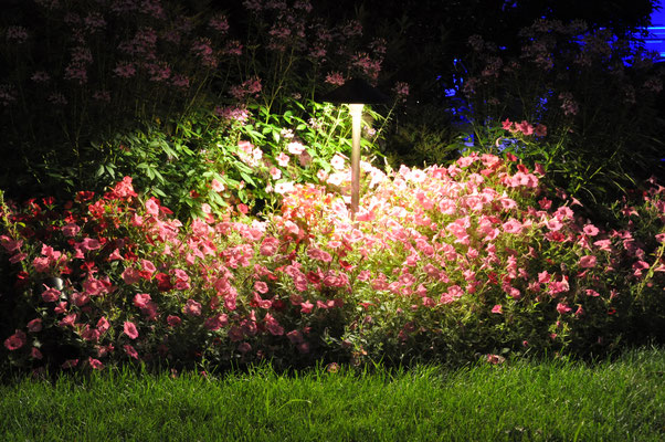 Why should this beautiful flower bed only be enjoyed by day? A tall path light with a wide beam spread allows the homeowners and their guests to enjoy these flowers after dark. Bergen County, NJ