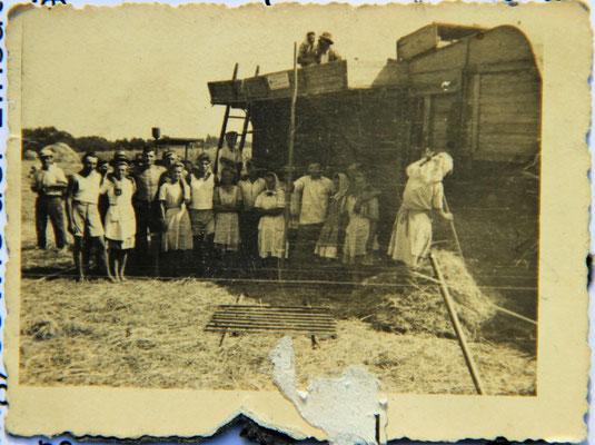 Die Samatimer beim Dreschen auf dem Kornfeld