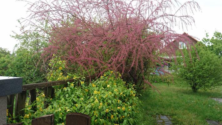 Garten_Backyard