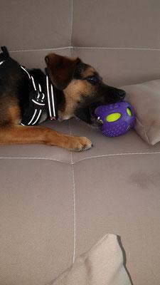 ein toller Spielball für Hunde ...