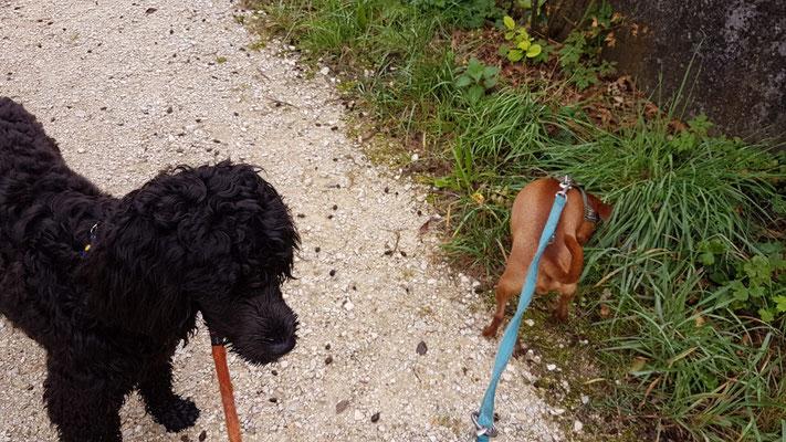 Elu und Fuffi auf dem Spaziergang