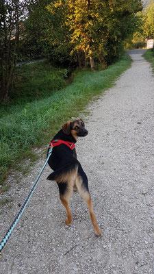 Charlie auf dem Spaziergang ...